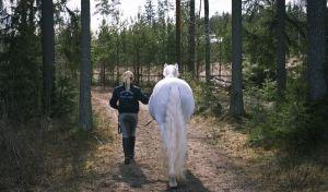 Nainen taluttaa valkoista hevosta metsätiellä