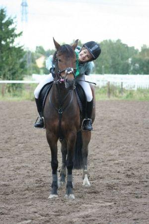 hevonen ja ratsastaja hiekkakentällä