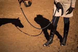 Hevosen siluetti