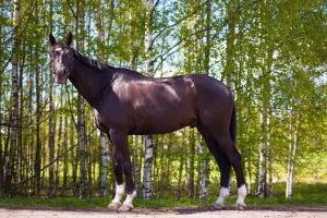 Ystäväni hevonen