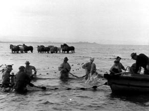 Hevosavusteista kalastusta Columbia-joellla (1947).