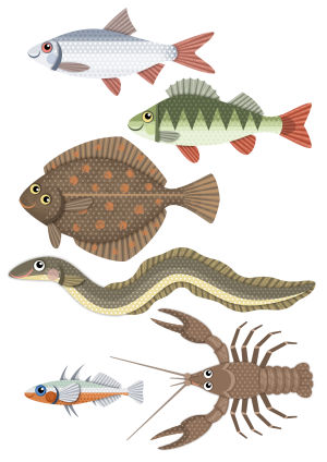 Pikku Kakkonen: kaloja