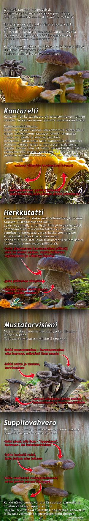Sienentunnistus