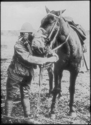 En amerikansk soldat och en häst som båda bär gasmasker under första världskriget.