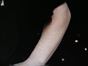 Kissantappovideota