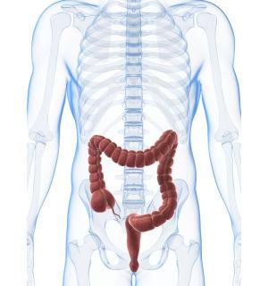 Tecknad bild som visar tjocktarmens läge i kroppen.