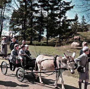 Lapsia aasiajelulla Korkeasaaressa 1952