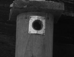 Linnunpönttö suojapellillä.