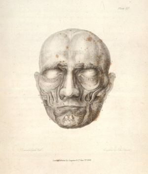 Piirros kasvoista. Tekijä: Bell, Charles. Essays on the Anatomy of Expression in Painting; The muscles of the face.
