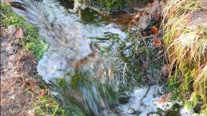 keväinen puro