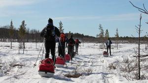 hiihtäjiä Lemmenjoen kansallispuistossa