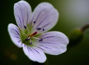 kukka erikoislähikuvassa