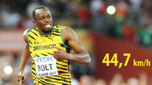 Usain Bolts hastighet är som bäst 44,7 km/h