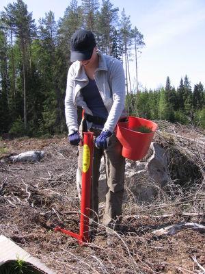 Nina Jungell som planterar skog.