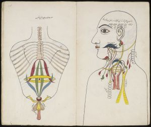 "View of anatomical drawings. Illustration on the right shows toso, while the illustration on the left focuses on the head and neck. From Mansur's Anatomy, also known as Tashrih-I Mansuri, a treatise on the five ""systems"" of the body: bones, nerves, muscle"