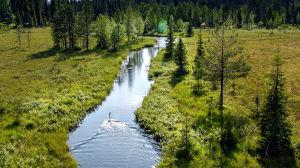 Flygbild över skogslandskap och våtmark.