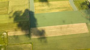 Flygbild över åkerlandskap.