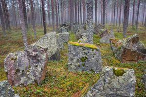 Pansarhinder i skogen vid Harparskoglinjen.