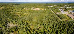Skog i Horsbäck