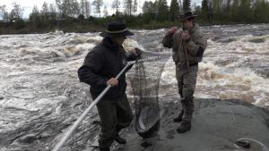 Kalastajia Tornionjoella