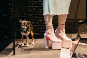 Pieni koira ja vaaleanpunaiset platform kengät