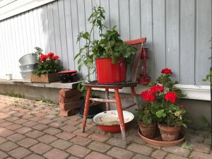 Blommor i röda kastruller.