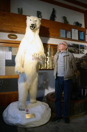 Pentti Kronqvist står bredvid en jättestor uppstoppad isbjörn.