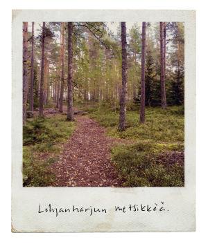 Maamme kirja 2017: Uusimaa, Lohjanharjun metsikköä