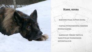 Hans Ristmeri - koira