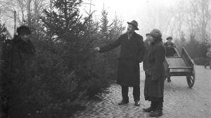 En gammal bild av ett par som köper en julgran