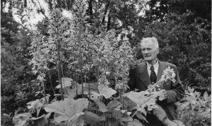 Oriveden Hörtsänän arboretumin perustaja Hugo Hörtsänä mustavalkoisessa kuvassa, kuva vuodelta 1945.