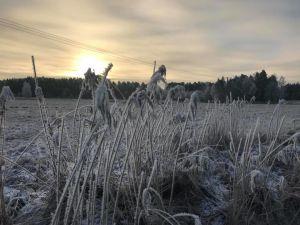 en vintrig åker med svagt solsken