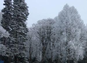 vintriga träd