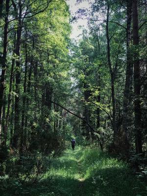 Polku metsän keskellä, kaukana näkyy ihminen hyvin pienenä kulkemassa selin kameraan, metsä kaartuu yläpuolelle.