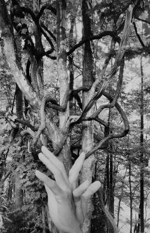 Kuvassa kädet ja puita.