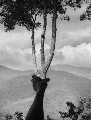 Kuvassa käsi, puu, vesistö.