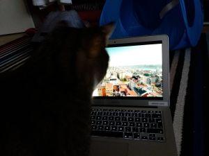 Zetor-kissa katsoo dokumenttielokuvaa Istanbulin kissat.