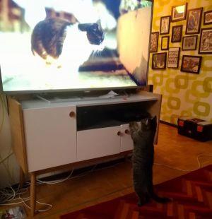 Duplo-kissa katsoo dokumenttielokuvaa Istanbulin kissat.