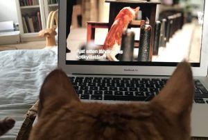Kalle-kissa katsoo dokumenttielokuvaa Istanbulin kissat.
