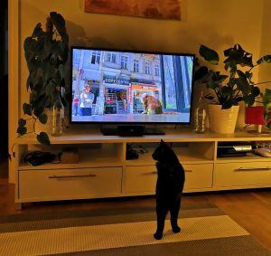 Nero-kissa katsoo dokumenttielokuvaa Istanbulin kissat.