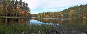 järveä ja metsää