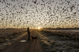 En människa och en hund som står på en grusväg i motljus, i bakgrunden går solen upp. Himlen är spräcklig av en flygande flock fåglar.