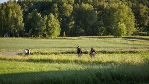 Vehreää peltoa kesäillassa, kaukana ihmishahmoja pyöräilemässä tai kävelemässä kohti kameraa.