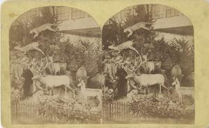 Gammal, svartvit bild på uppstoppade djur.