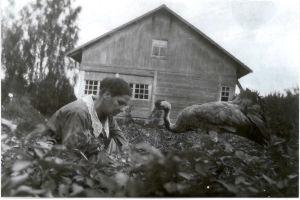 Svartvit bild: kvinna rensar i grönsaksland i sällskap av en uppstoppad trana.