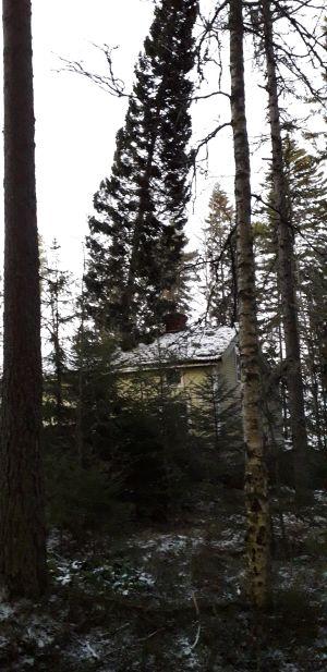 En gran som är ett på gånger längre än villan är hög har fallit mot villans tak.
