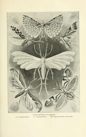 Teckning av malar.