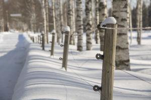 Viltstängsel går igenom ett snöigt skogslandskap