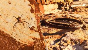 Hämähäkki kiipeää Dugan päällä