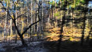 Saastunutta metsää